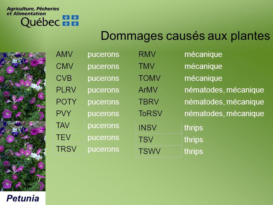 Dommages causés aux plantes Petunia RMVmécanique TMVmécanique TOMVmécanique ArMVnématodes, mécanique TBRVnématodes, mécanique ToRSVnématodes, mécaniqu