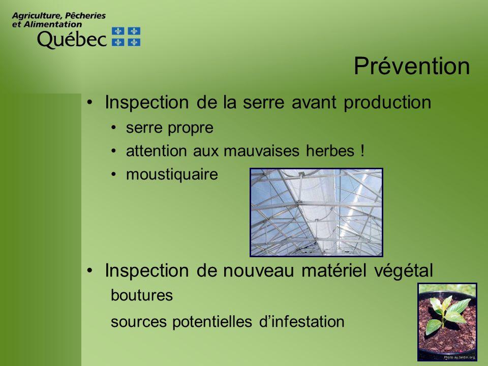 Prévention Inspection de la serre avant production serre propre attention aux mauvaises herbes ! moustiquaire Inspection de nouveau matériel végétal b
