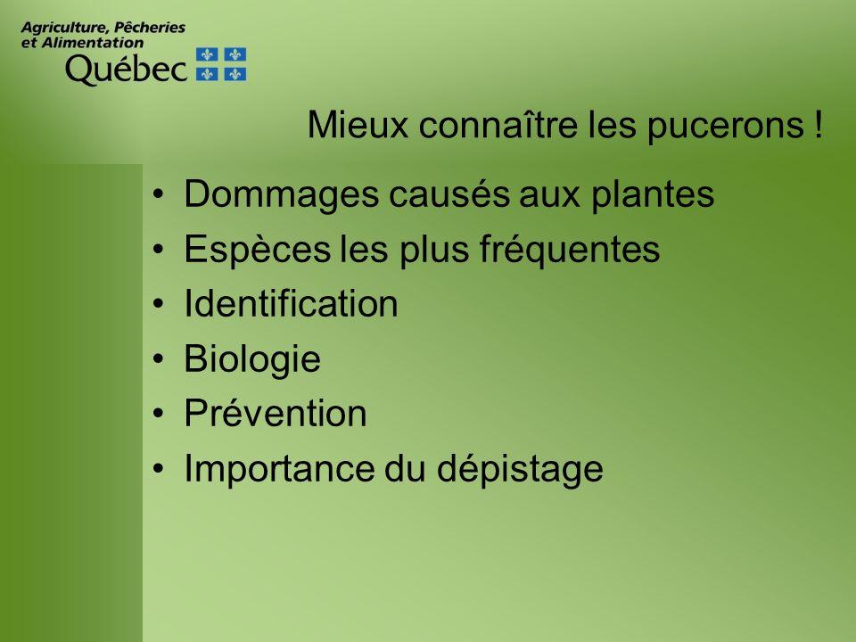 Mieux connaître les pucerons ! Dommages causés aux plantes Espèces les plus fréquentes Identification Biologie Prévention Importance du dépistage