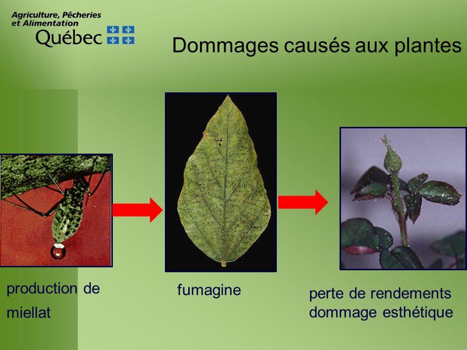 Dommages causés aux plantes Transmission de maladies à virus 300 espèces de pucerons 250 virus : Potyvirus virus non persistantsvirus persistants (Tiré de Albouy et Devergne 1998)