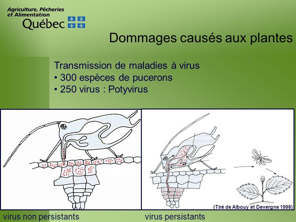 Dommages causés aux plantes Transmission de maladies à virus 300 espèces de pucerons 250 virus : Potyvirus virus non persistantsvirus persistants (Tir