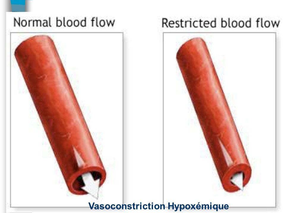 Groupe 3: Pas Seulement MPOC! n MPOC n Pneumopathie interstitielle –cicatrisation de linterstitium n Apnée du sommeil –hypoxie n Altitude –hypoxie