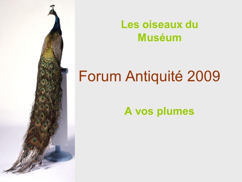 Forum Antiquité 2009 A vos plumes Les oiseaux du Muséum