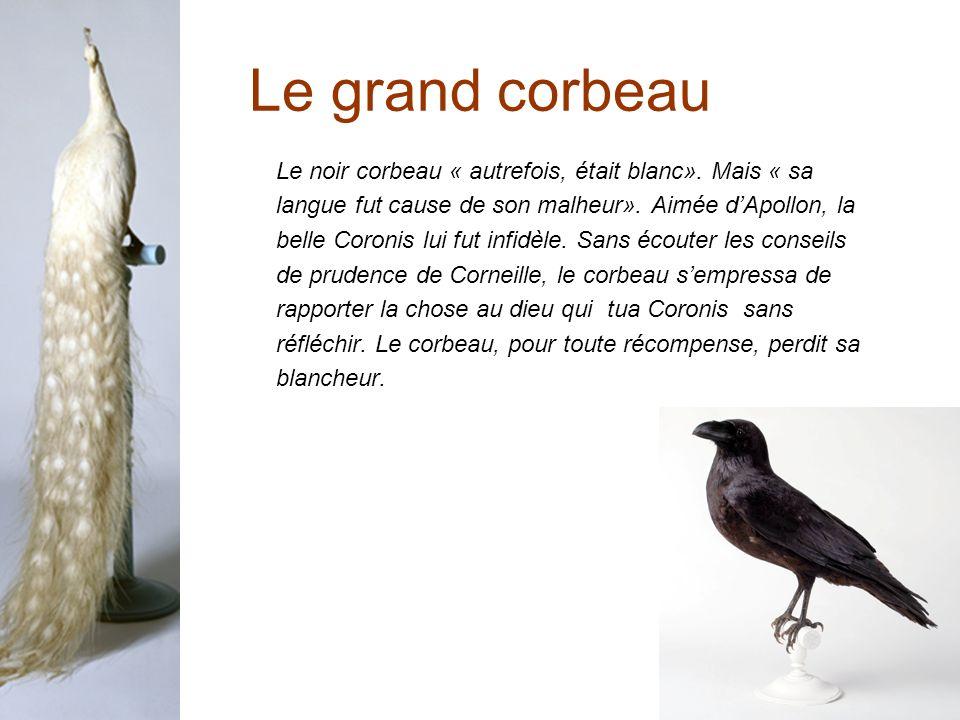 Le grand corbeau Le noir corbeau « autrefois, était blanc».