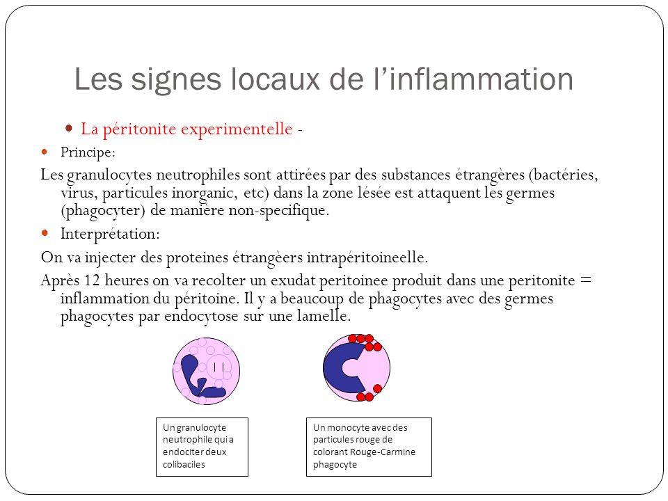 Les signes locaux de linflammation La péritonite experimentelle - Principe: Les granulocytes neutrophiles sont attirées par des substances étrangères