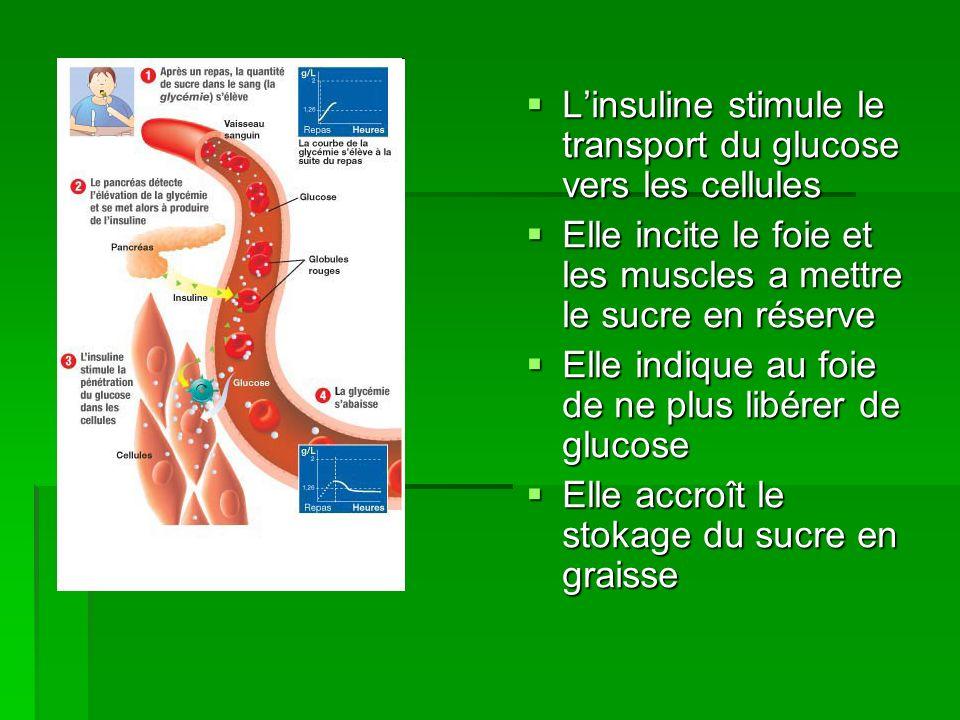 Linsuline stimule le transport du glucose vers les cellules Linsuline stimule le transport du glucose vers les cellules Elle incite le foie et les mus