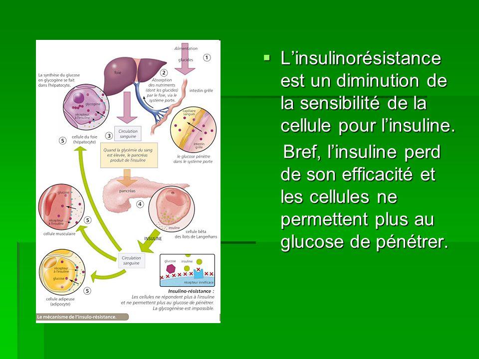 Linsulinorésistance est un diminution de la sensibilité de la cellule pour linsuline. Linsulinorésistance est un diminution de la sensibilité de la ce