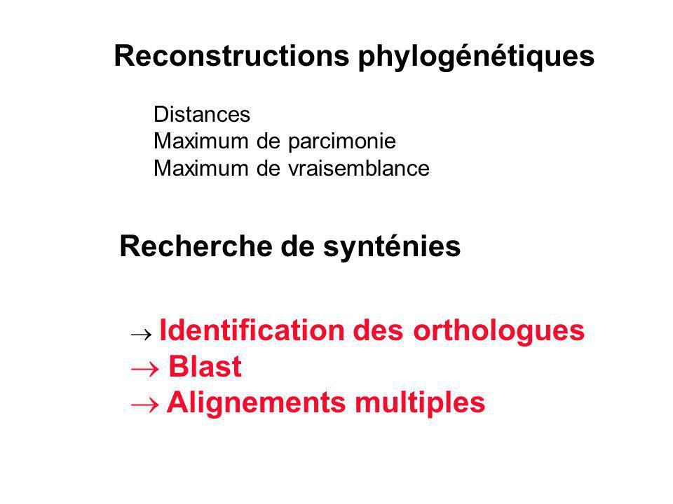 Reconstructions phylogénétiques Distances Maximum de parcimonie Maximum de vraisemblance Recherche de synténies Identification des orthologues Blast A