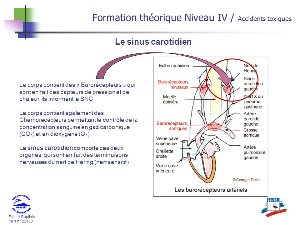 Patrick Baptiste MF1 n° 22108 Formation théorique Niveau IV / Accidents toxiques Le sinus carotidien Le corps contient des « Barorécepteurs » qui sont en fait des capteurs de pression et de chaleur, ils informent le SNC.