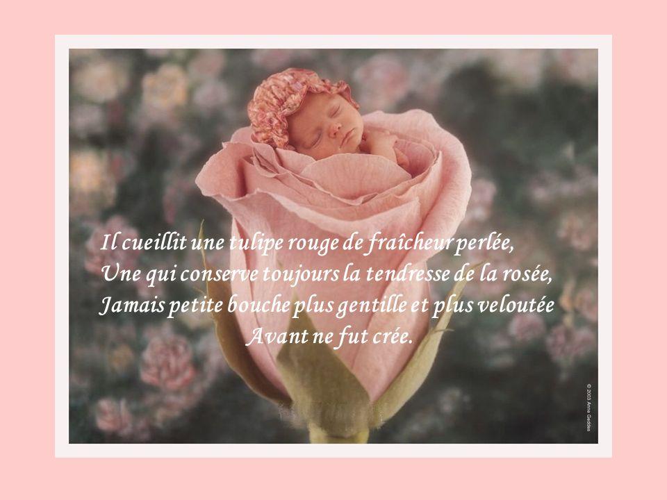 Il cueillit une tulipe rouge de fraîcheur perlée, Une qui conserve toujours la tendresse de la rosée, Jamais petite bouche plus gentille et plus veloutée Avant ne fut crée.