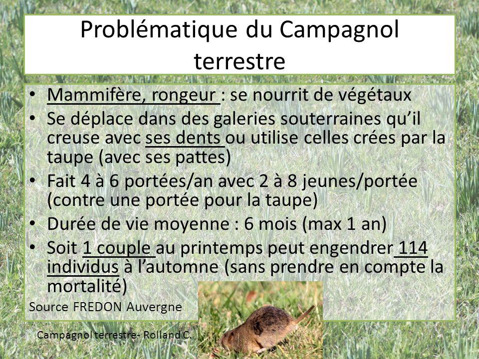 Problématique du Campagnol terrestre Mammifère, rongeur : se nourrit de végétaux Se déplace dans des galeries souterraines quil creuse avec ses dents ou utilise celles crées par la taupe (avec ses pattes) Fait 4 à 6 portées/an avec 2 à 8 jeunes/portée (contre une portée pour la taupe) Durée de vie moyenne : 6 mois (max 1 an) Soit 1 couple au printemps peut engendrer 114 individus à lautomne (sans prendre en compte la mortalité) Source FREDON Auvergne Campagnol terrestre- Rolland C.