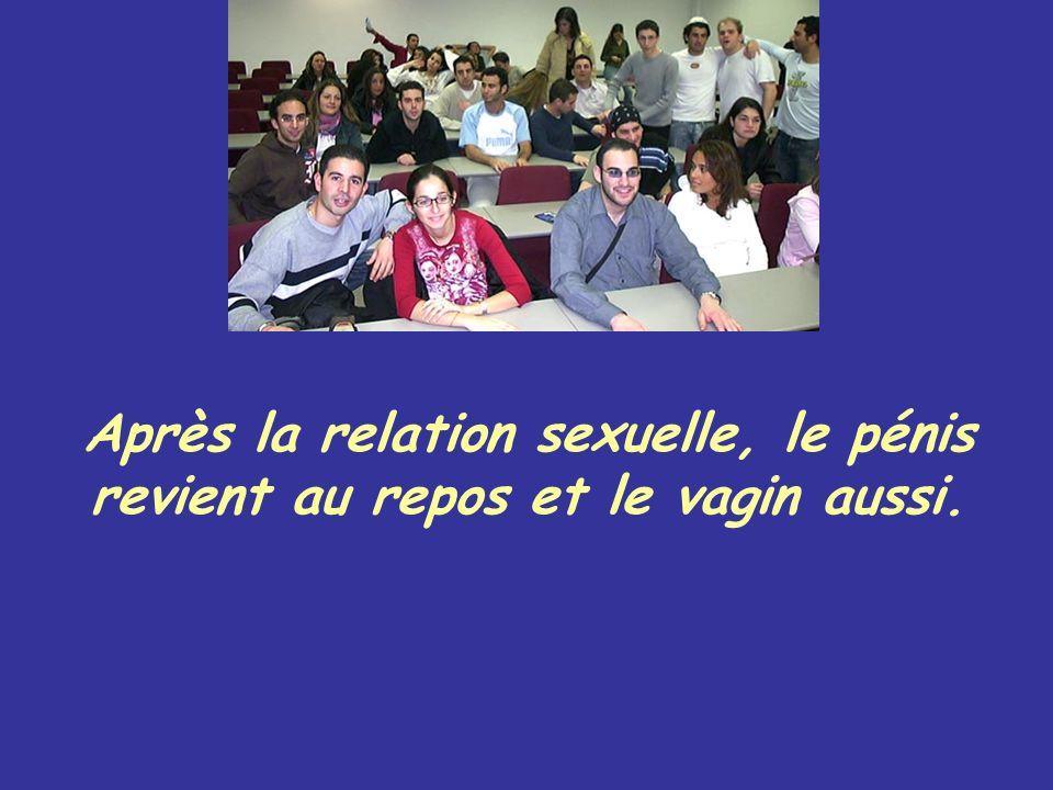 Après la relation sexuelle, le pénis revient au repos et le vagin aussi.