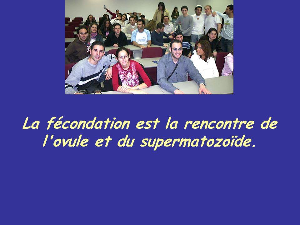 La fécondation est la rencontre de l'ovule et du supermatozoïde.