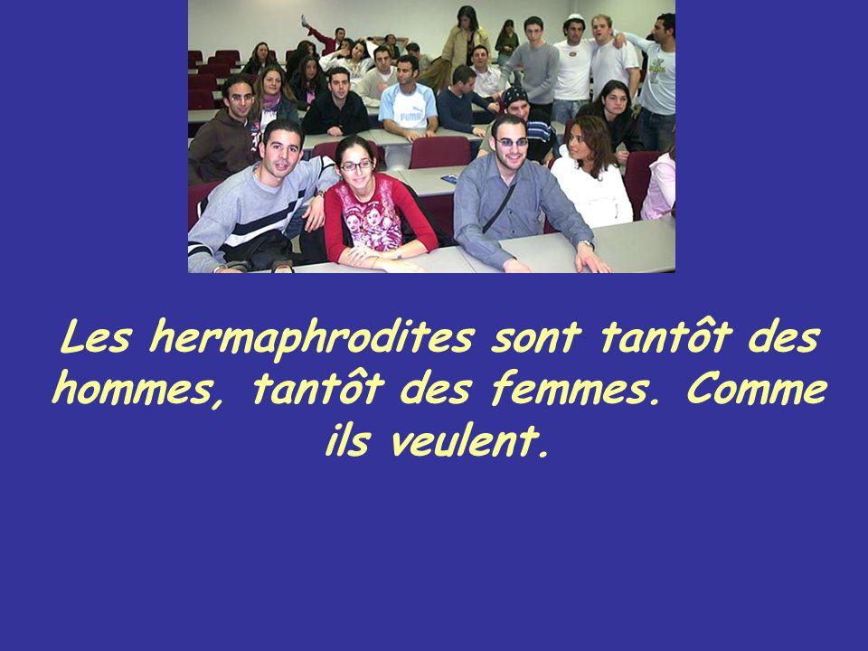 Les hermaphrodites sont tantôt des hommes, tantôt des femmes. Comme ils veulent.
