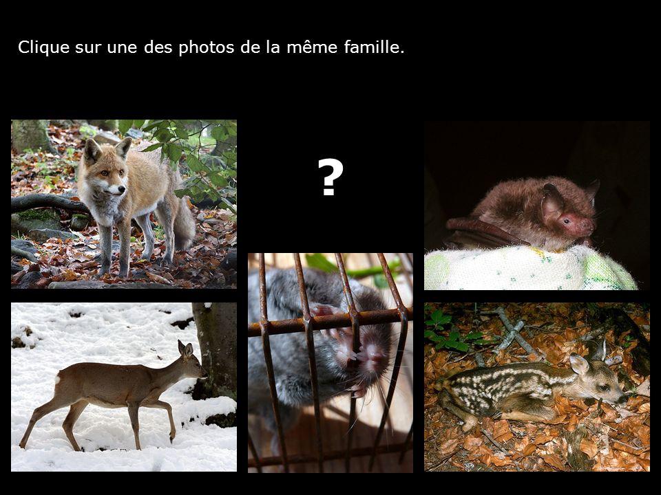 Clique sur une des photos de la même famille. ?