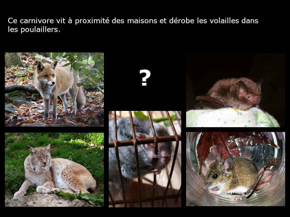 Ce carnivore vit à proximité des maisons et dérobe les volailles dans les poulaillers. ?