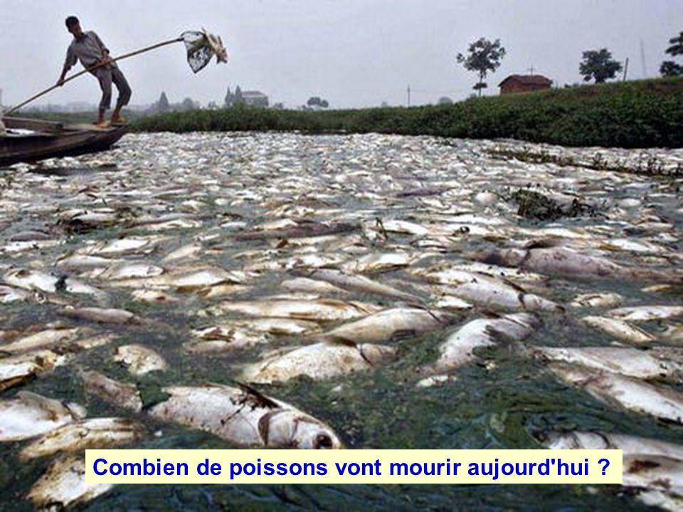 Combien de poissons vont mourir aujourd hui ?