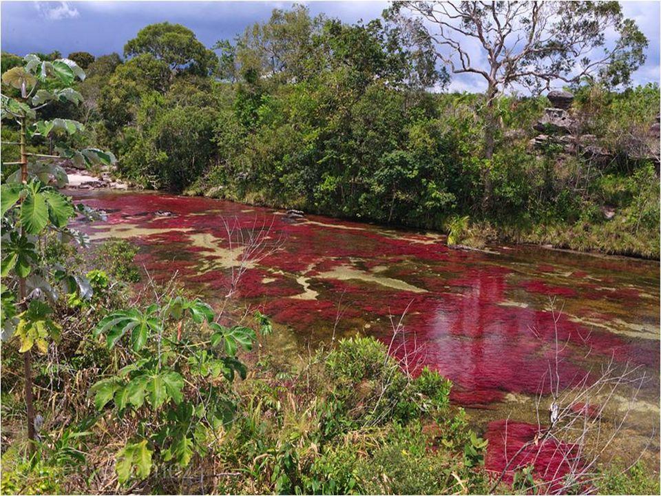 Il s'agit d'une excursion courte sur la rivière, de seulement 100 km et une piste de 20 m de large, donc selon le langage traditionnel de la région il