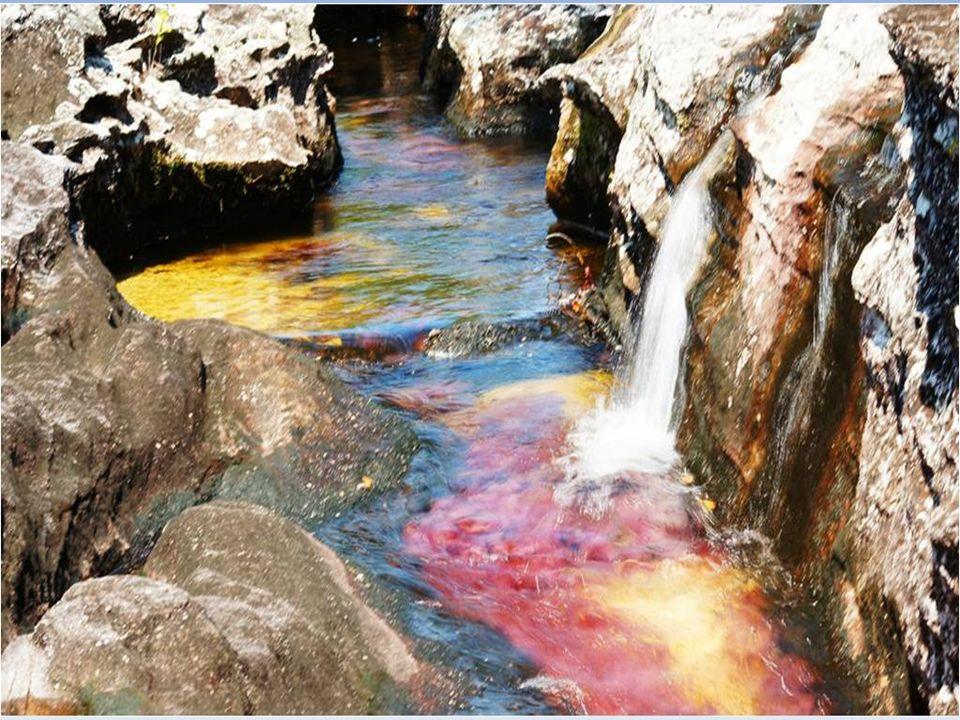 Cristaux de Caño est une rivière appelée «la plus belle du monde« a été aussi appelé