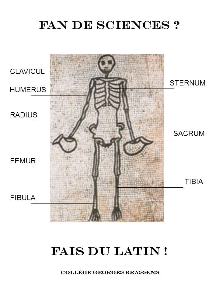 FAIS DU LATIN ! FAN DE SCIENCES ? COLLÈGE GEORGES BRASSENS HUMERUS RADIUS CLAVICUL STERNUM SACRUM FEMUR TIBIA FIBULA