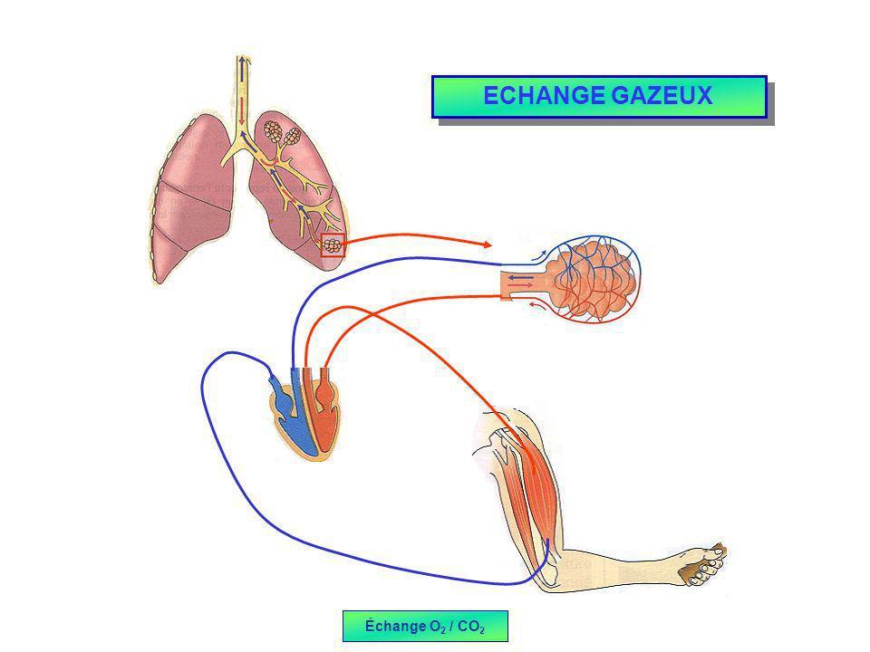 ECHANGE GAZEUX Échange O 2 / CO 2