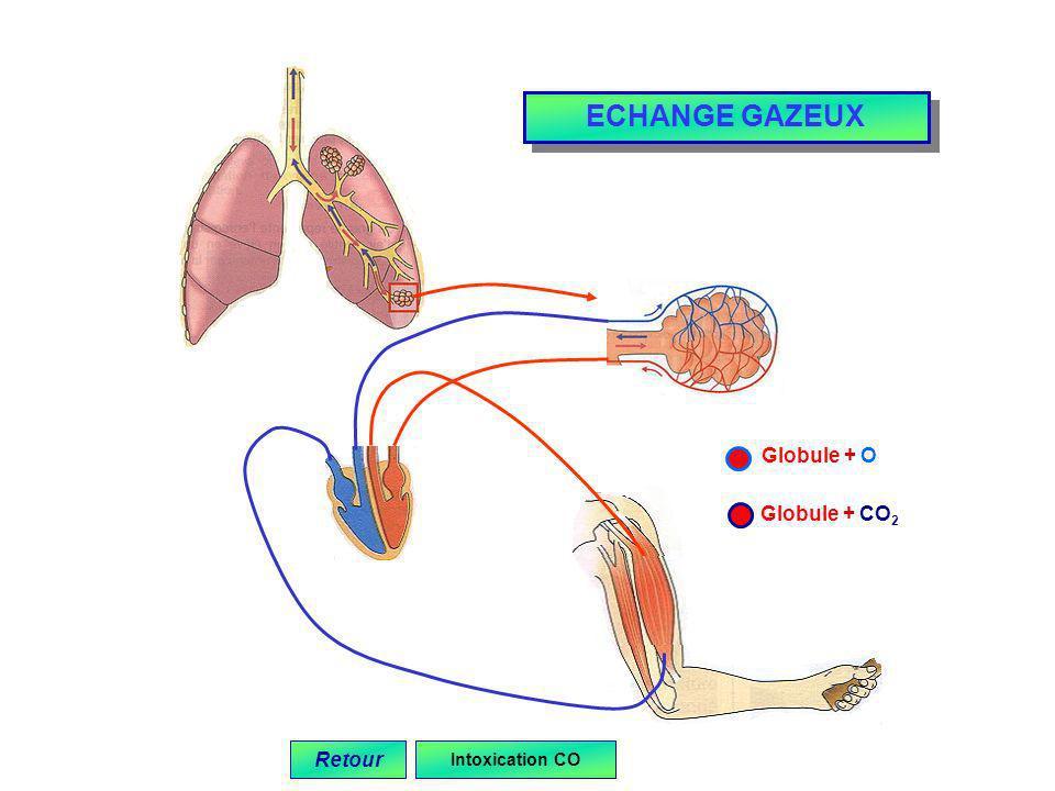 Globule + O Globule + CO 2 Retour ECHANGE GAZEUX Intoxication CO