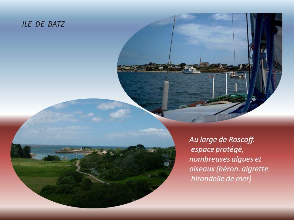 Phare du Paon au Nord de l ile de Bréhat, en granit rose.