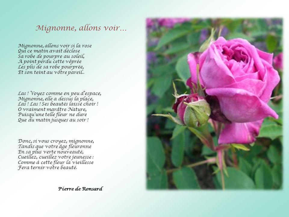 Mignonne, allons voir… Mignonne, allons voir si la rose Qui ce matin avait déclose Sa robe de pourpre au soleil, A point perdu cette vêprée Les plis d