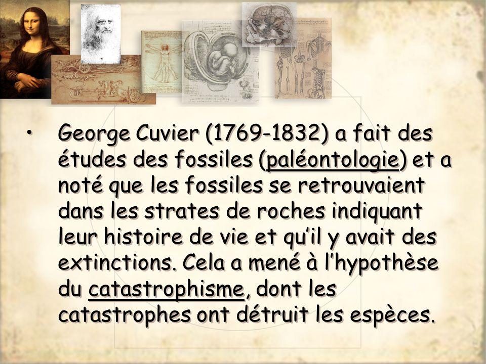 George Cuvier (1769-1832) a fait des études des fossiles (paléontologie) et a noté que les fossiles se retrouvaient dans les strates de roches indiqua