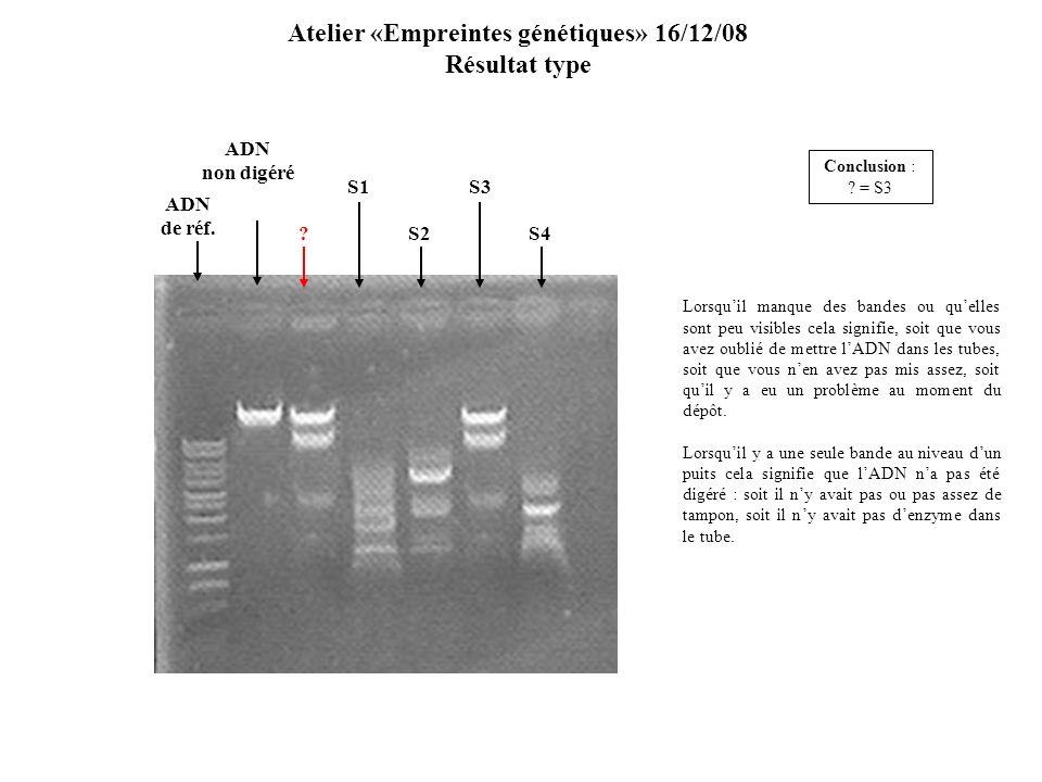 S2S4 S1 ADN de réf. S3 ? Atelier «Empreintes génétiques» 16/12/08 Résultat type Lorsquil manque des bandes ou quelles sont peu visibles cela signifie,