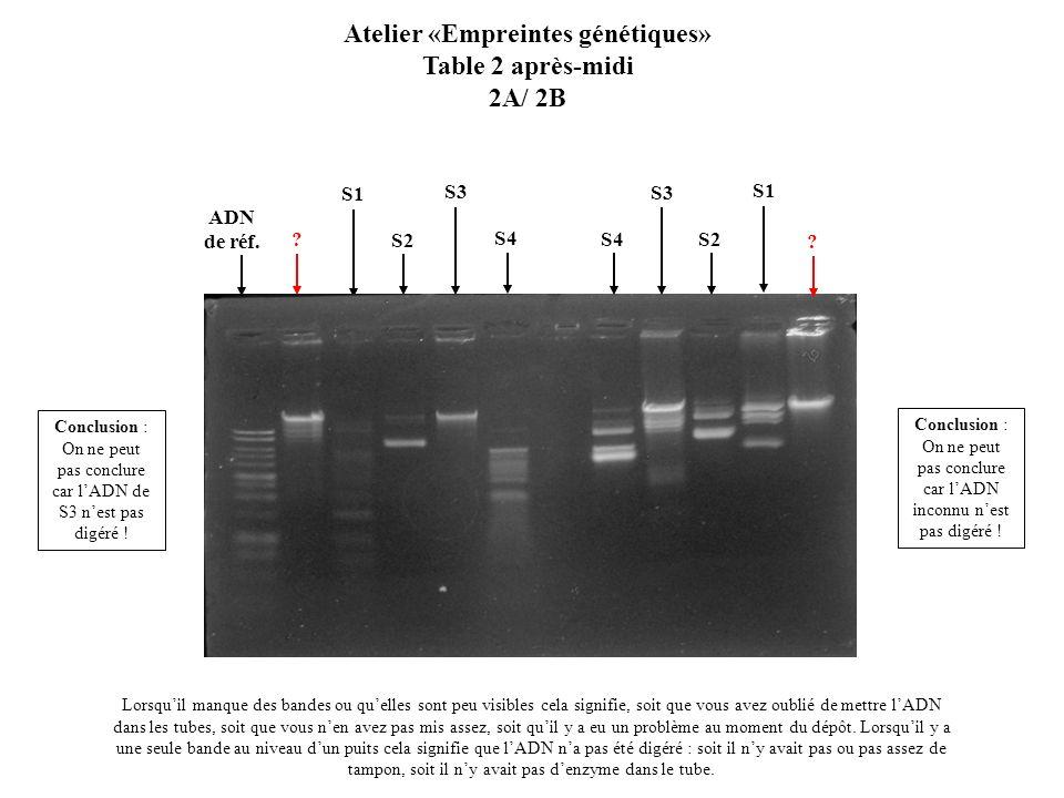 S2 S1 S3 ? Atelier «Empreintes génétiques» Table 2 après-midi 2A/ 2B Lorsquil manque des bandes ou quelles sont peu visibles cela signifie, soit que v