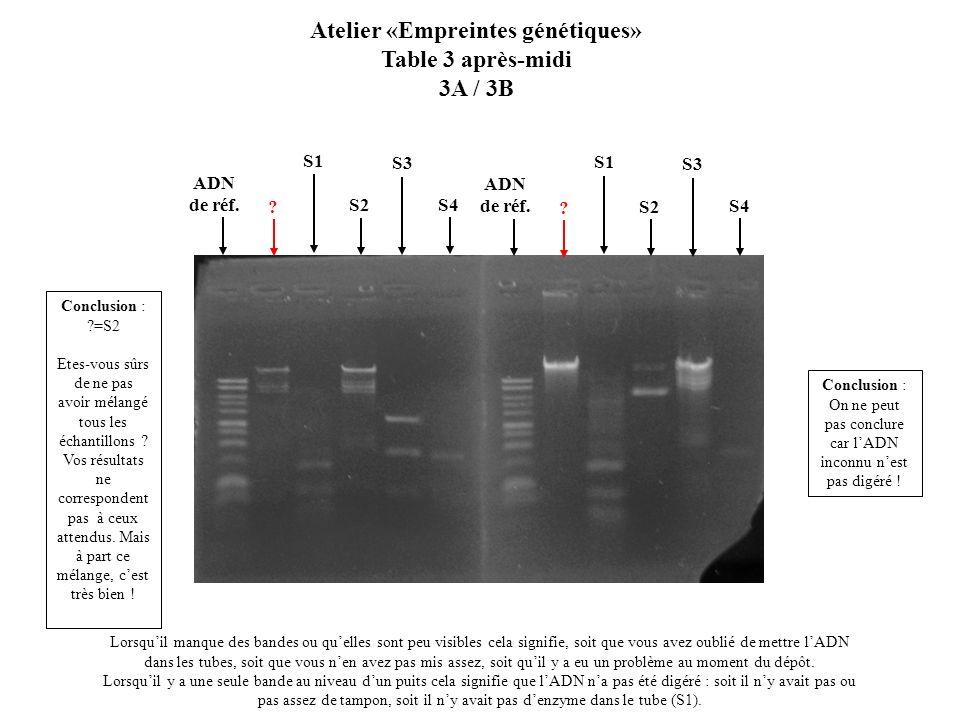 S2 Atelier «Empreintes génétiques» Table 3 après-midi 3A / 3B Lorsquil manque des bandes ou quelles sont peu visibles cela signifie, soit que vous ave