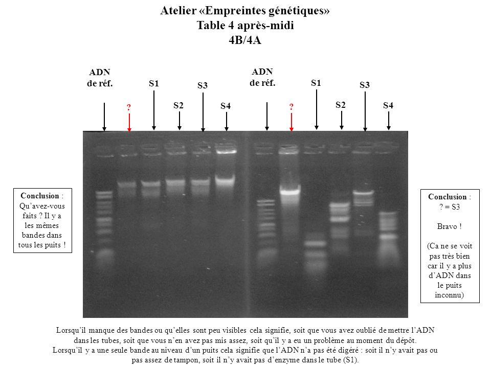 S1 S3 ? Atelier «Empreintes génétiques» Table 4 après-midi 4B/4A Lorsquil manque des bandes ou quelles sont peu visibles cela signifie, soit que vous