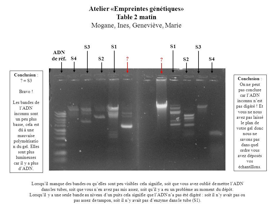 S2 Atelier «Empreintes génétiques» Table 2 matin Mogane, Ines, Geneviève, Marie Lorsquil manque des bandes ou quelles sont peu visibles cela signifie,