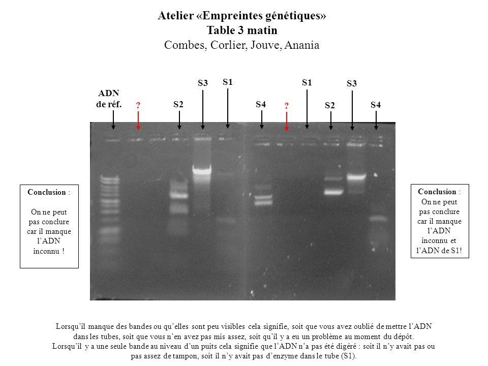 S2 Atelier «Empreintes génétiques» Table 3 matin Combes, Corlier, Jouve, Anania Lorsquil manque des bandes ou quelles sont peu visibles cela signifie,