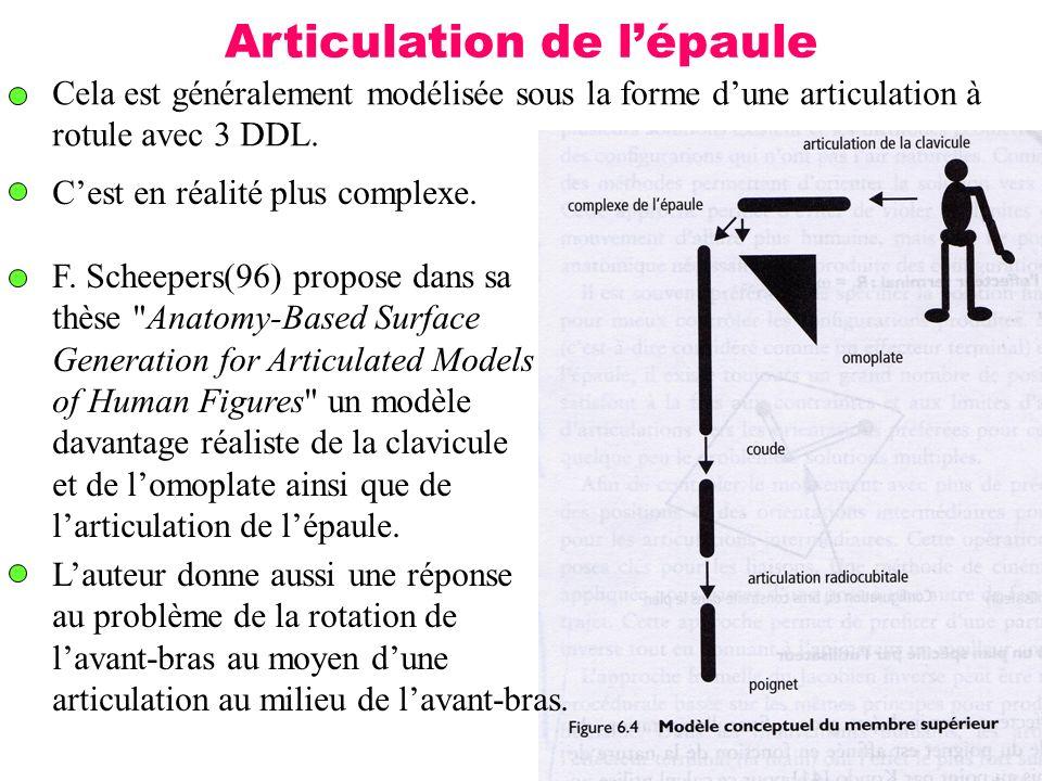 18 Articulation de lépaule Cela est généralement modélisée sous la forme dune articulation à rotule avec 3 DDL. Cest en réalité plus complexe. F. Sche