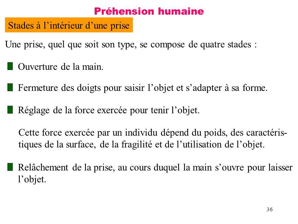 36 Préhension humaine Stades à lintérieur dune prise Une prise, quel que soit son type, se compose de quatre stades : Ouverture de la main. Fermeture