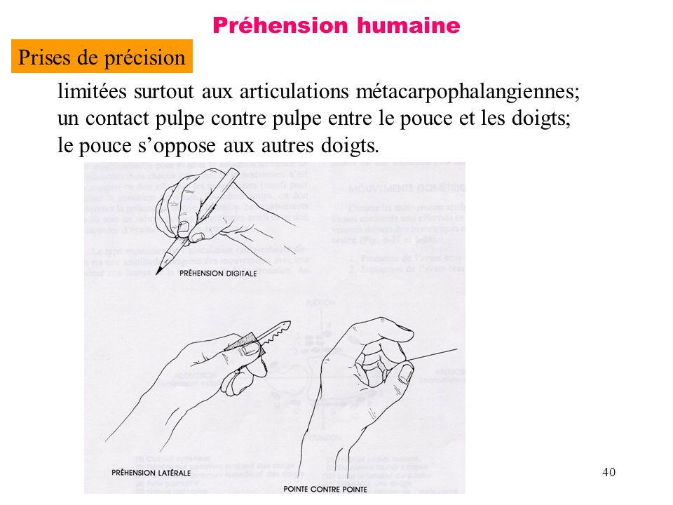 40 Préhension humaine Prises de précision limitées surtout aux articulations métacarpophalangiennes; un contact pulpe contre pulpe entre le pouce et l