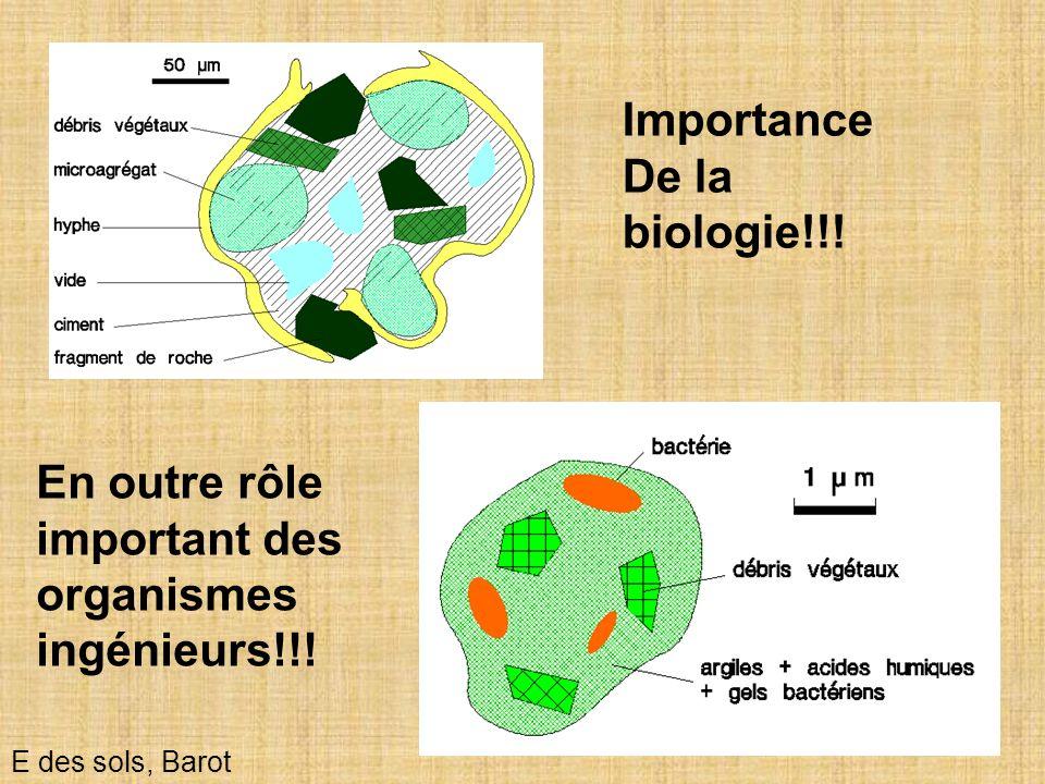 24 Importance De la biologie!!! E des sols, Barot En outre rôle important des organismes ingénieurs!!!
