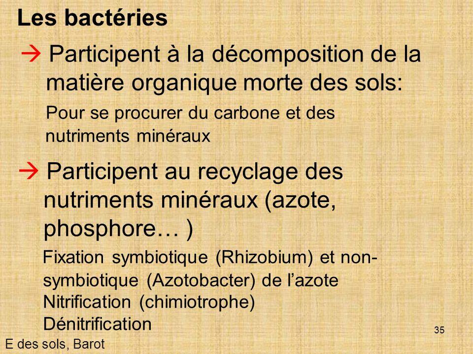 35 Les bactéries Participent au recyclage des nutriments minéraux (azote, phosphore… ) Fixation symbiotique (Rhizobium) et non- symbiotique (Azotobact