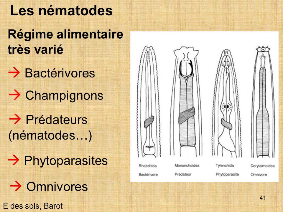 41 Les nématodes Régime alimentaire très varié E des sols, Barot Bactérivores Phytoparasites Prédateurs (nématodes…) Omnivores Champignons