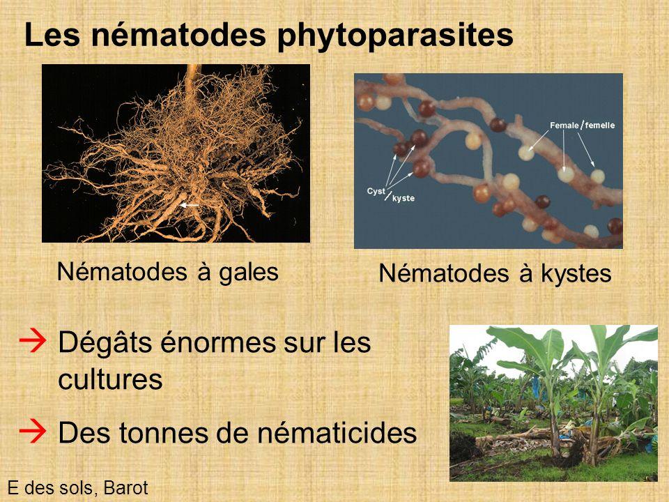 43 Les nématodes phytoparasites E des sols, Barot Nématodes à kystes Dégâts énormes sur les cultures Des tonnes de nématicides Nématodes à gales