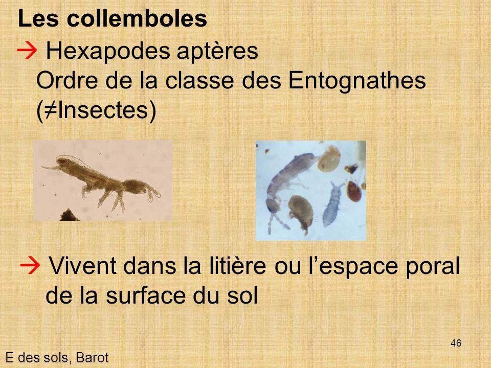 46 Les collemboles Hexapodes aptères Ordre de la classe des Entognathes (Insectes) E des sols, Barot Vivent dans la litière ou lespace poral de la sur
