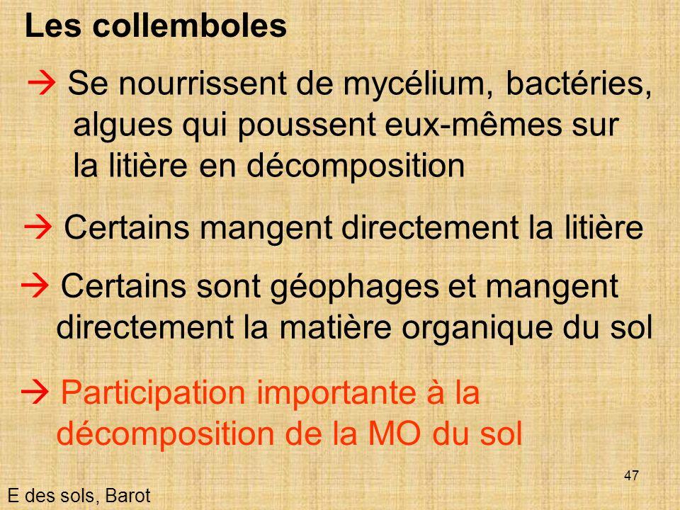 47 Les collemboles E des sols, Barot Se nourrissent de mycélium, bactéries, algues qui poussent eux-mêmes sur la litière en décomposition Certains son