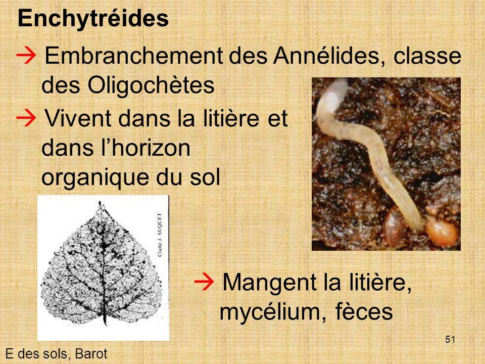 51 Enchytréides E des sols, Barot Embranchement des Annélides, classe des Oligochètes Vivent dans la litière et dans lhorizon organique du sol Mangent