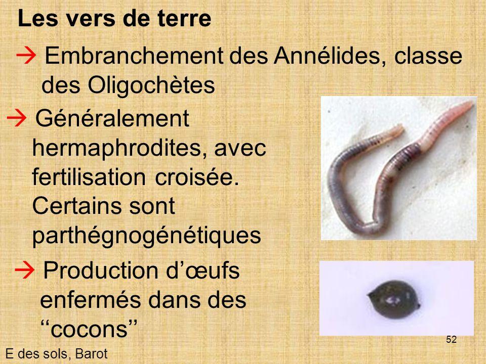52 Les vers de terre E des sols, Barot Embranchement des Annélides, classe des Oligochètes Généralement hermaphrodites, avec fertilisation croisée. Ce