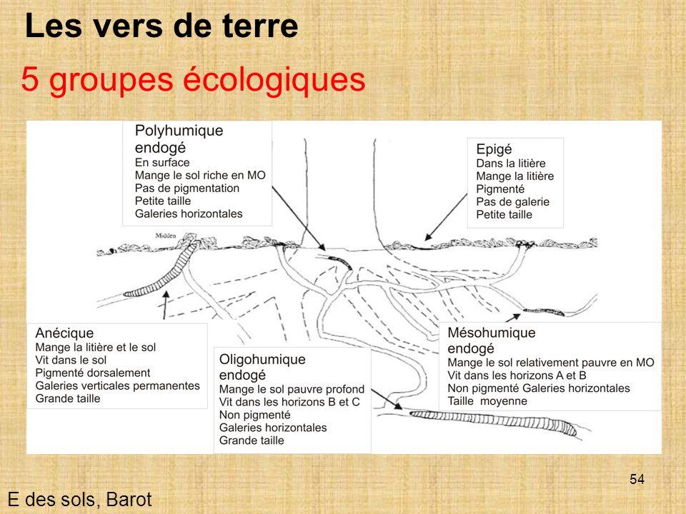 54 Les vers de terre E des sols, Barot 5 groupes écologiques