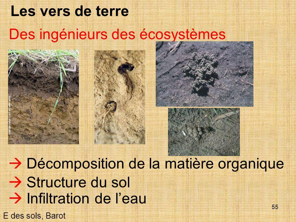 55 Les vers de terre E des sols, Barot Des ingénieurs des écosystèmes Décomposition de la matière organique Structure du sol Infiltration de leau