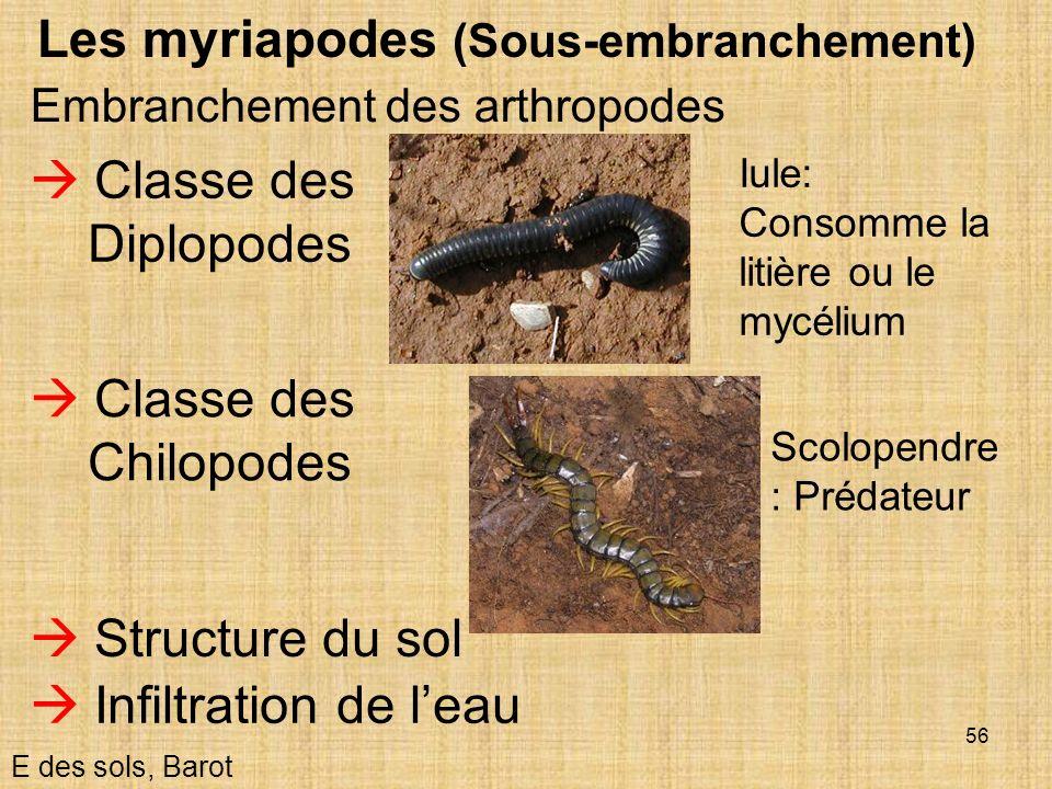 56 Les myriapodes (Sous-embranchement) E des sols, Barot Embranchement des arthropodes Classe des Diplopodes Structure du sol Infiltration de leau Cla