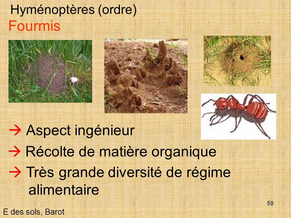 59 Hyménoptères (ordre) E des sols, Barot Fourmis Aspect ingénieur Récolte de matière organique Très grande diversité de régime alimentaire